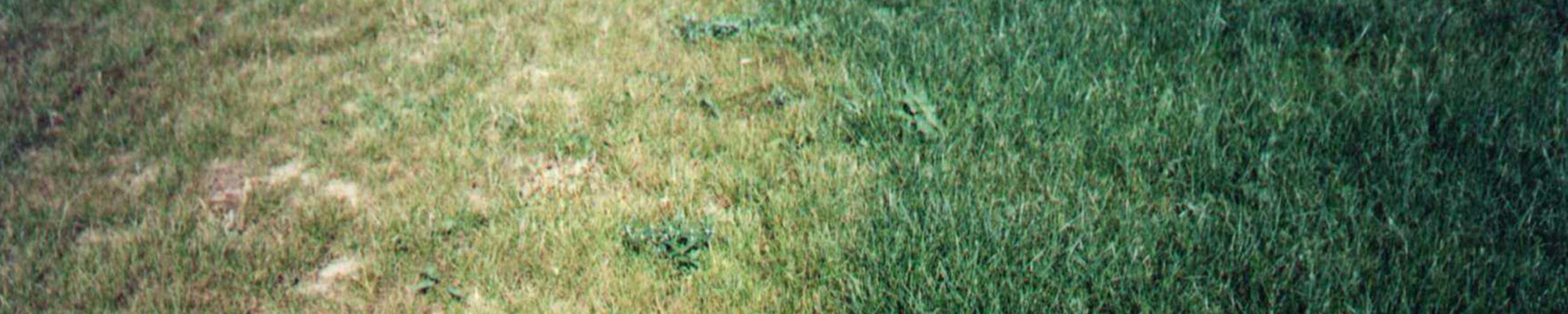 Pokus na trávníku ve Gbelech