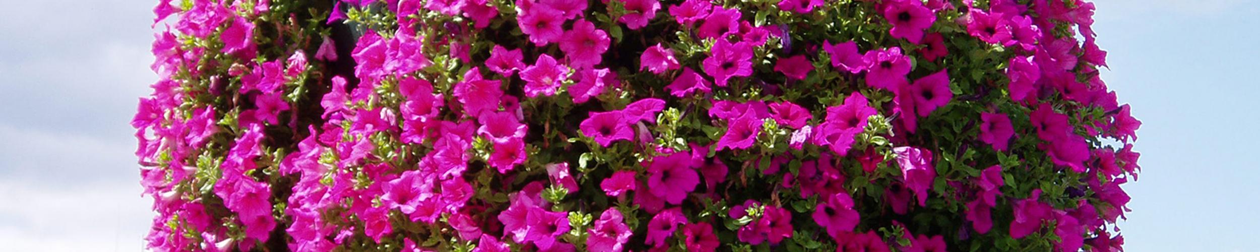 Závěsné květináče v Otrokovice